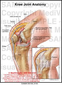 hip joint diagram 2004 vw touareg radio wiring knee anatomy medical illustration medivisuals