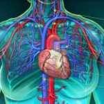 Pathologie vasculaire du sujet âgé
