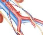 Stratégie de la conduite des examens chez le patient polyvasculaire