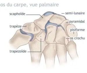 Fractures des os du carpe