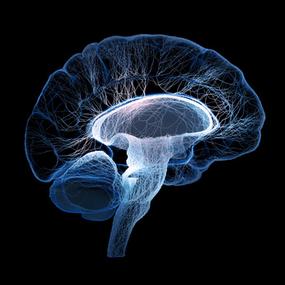 Bases biochimiques et neurobiologiques de la psychiatrie