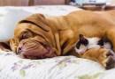 mačka-pas-prijatelji