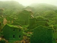 zelenilo