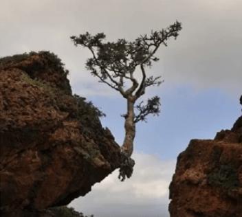 snaga prirode