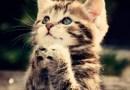 Mačke i psi mogu sudjelovati u molitvi!