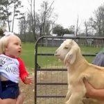 VIDEO: razgovor bebe i jarića uljepšat će vam dan