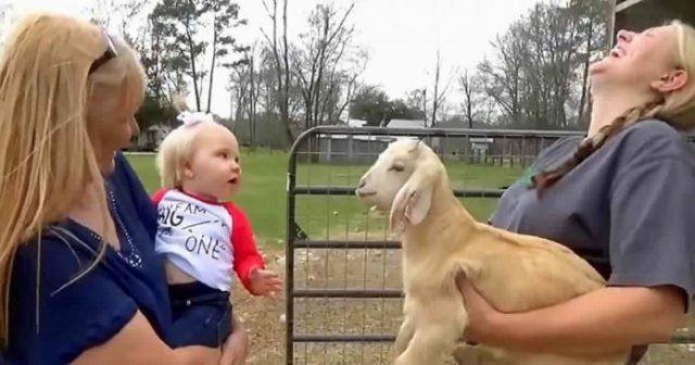 razgovor bebe i jarića uljepšat će vam dan