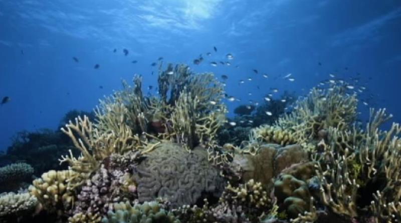 Poplave u Sjevernoj Australiji ugrozile Veliki koraljni greben