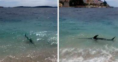 Sabljarka u Primoštenu stigla do same plaže