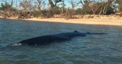 Otkrivena nova vrsta kita i odmah dodana na popis kritično ugroženih vrsta