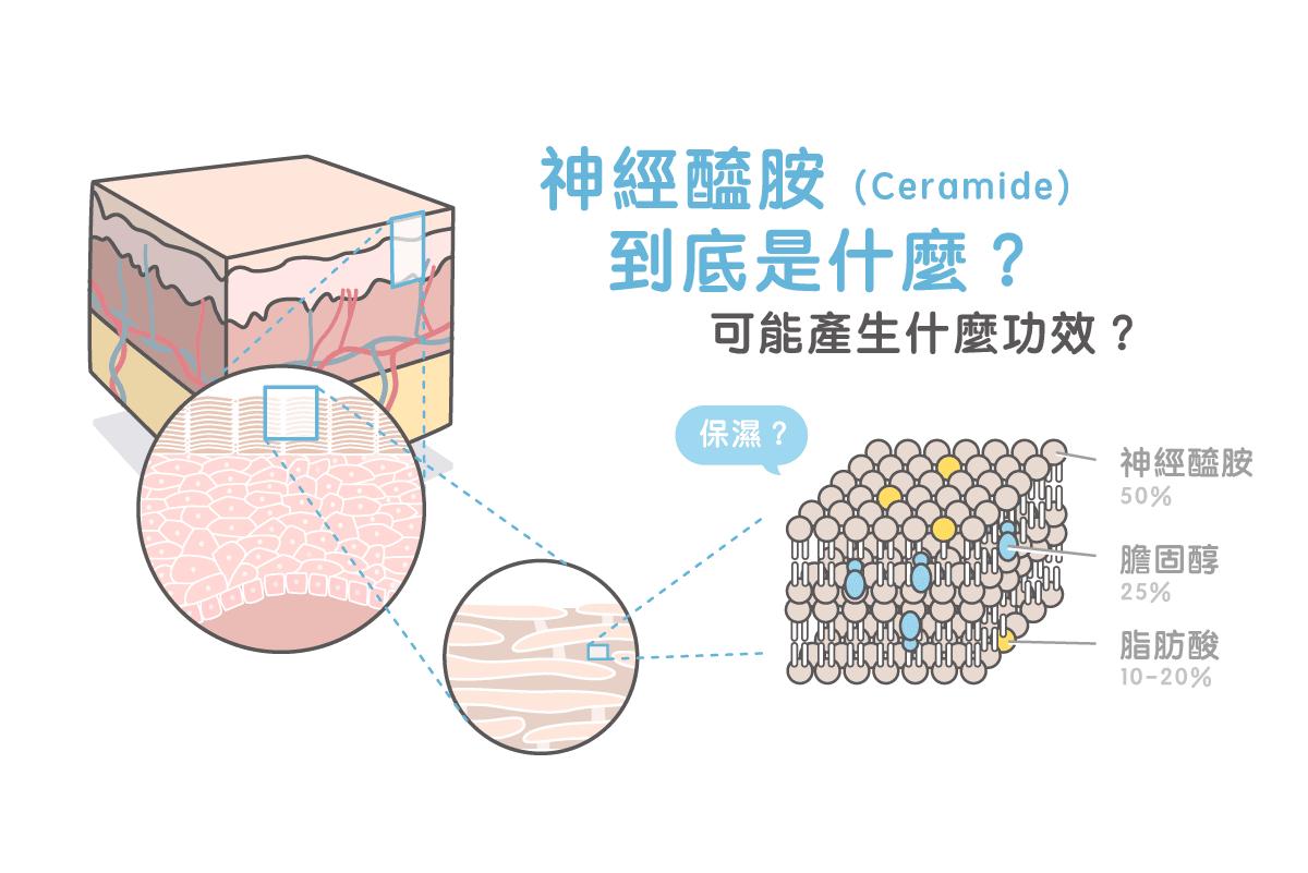 神經醯胺(Ceramide)到底是什麼?可能產生什麼功效?專家完整解密!   美的好朋友