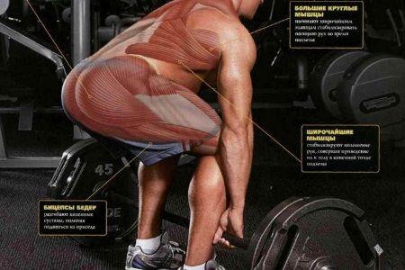 Особливості роботи м'язів під час станової тяги