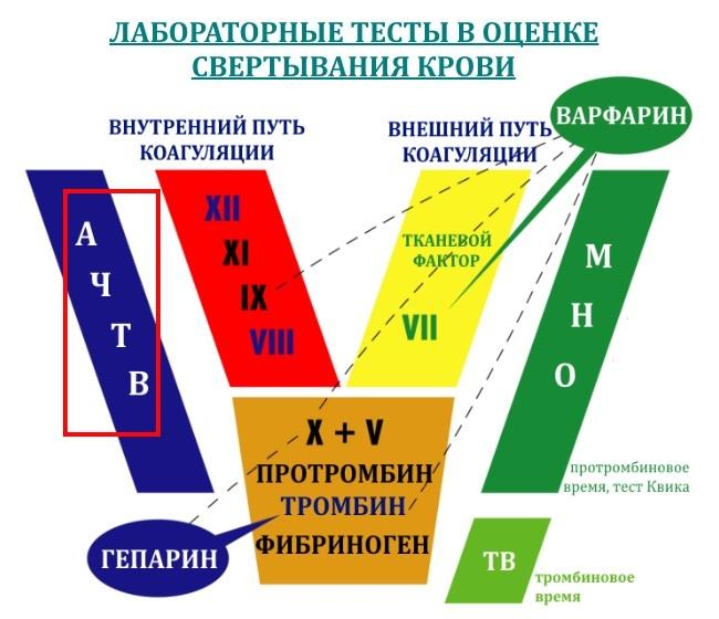 achtv-aktivirovannoe-chastichnoe-tromboplastinovoe-vremya