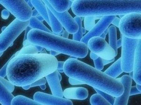 бактерии вызывающие воспаление