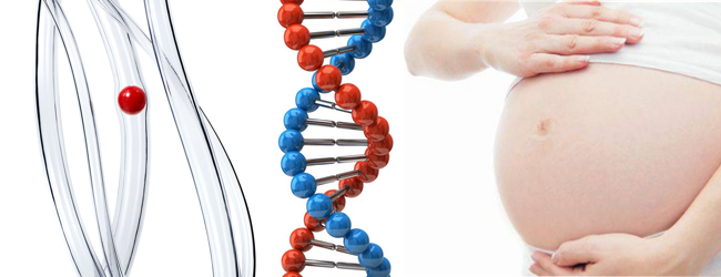 mutaciya-faktora-ii-protrombina