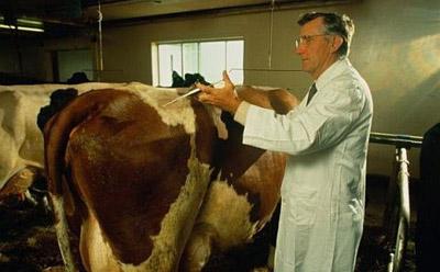 ветеринары проводят клинический осмотр животных