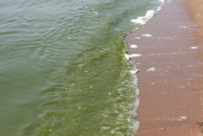 ксенобактерии для очистки почв и водоемов