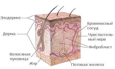 Причины повышенной чувствительности кожи