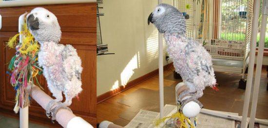 Инфицированная птица.