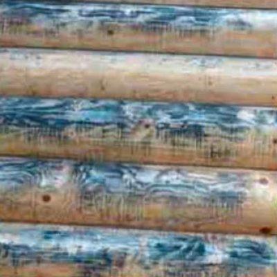 деревоокрашивающие грибы