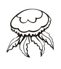 Imagenes Para Colorear De Medusas Medusa Mitologia Para