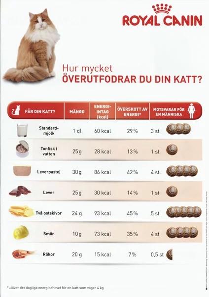 hur mycket mat till katt