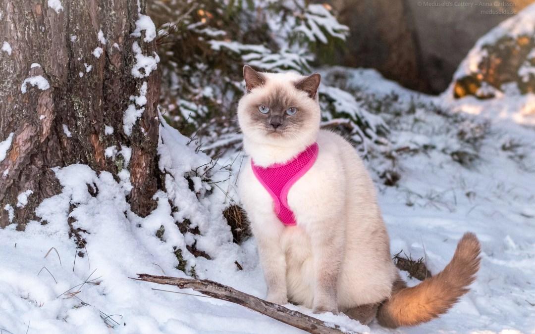 Julklapp till katt och kattägare 2020. Tips!