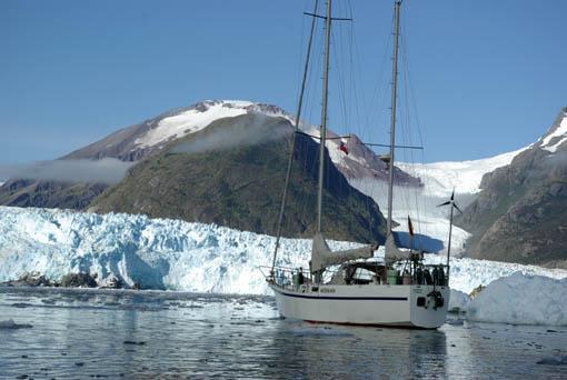 Meerbaer vorm Gletscher Amalia