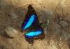 Schmetterlinge aller Farben und Grössen