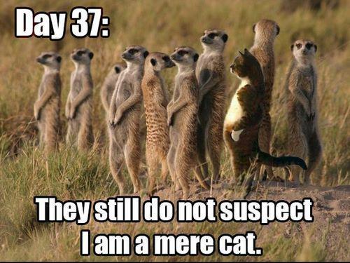 Tag  funny memes   Meerkat Communications