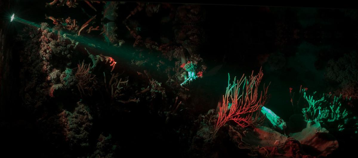Mondlicht montiert im Meerwasseraquarium