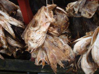 Hier maken ze in Afrika nog vismeel van