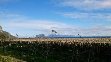 En ook op het eiland Værøya veel stokvis