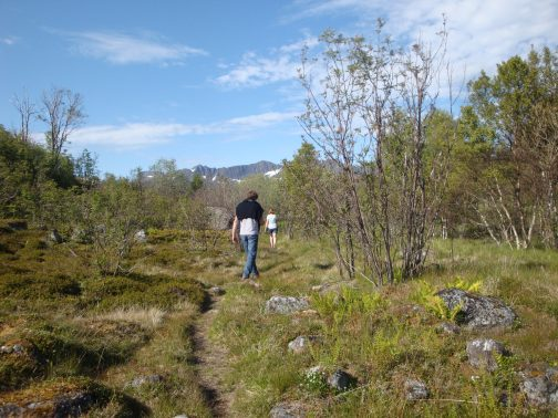 Het was de kortste weg, maar lastig voor Ypie, want nog gewond, op weg naar de Akvariet in Kabelvåg