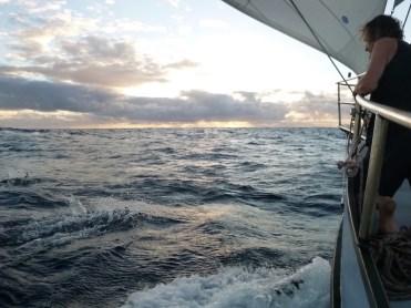 Zonder reddingsvest, nou ja, dolfijnen kijken, geen tijd om er 1 aan te trekken