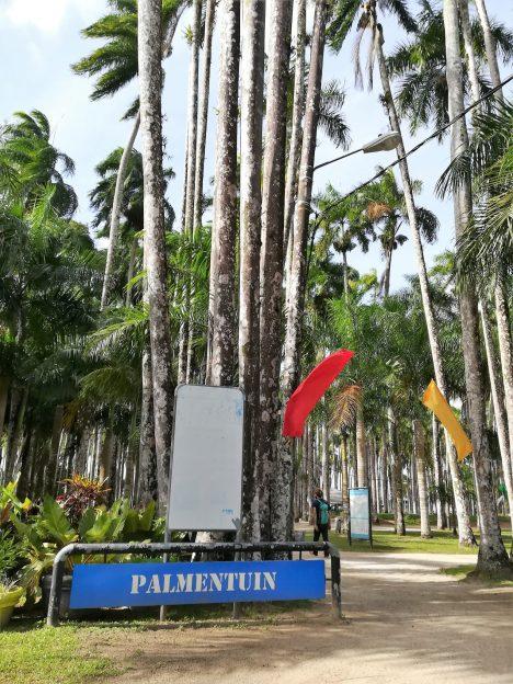 De Palmentuin achter het Presidentieel Paleis