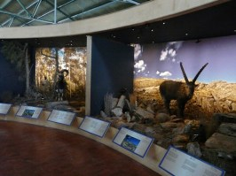 The Natural History Museum of Crete in Heraklion