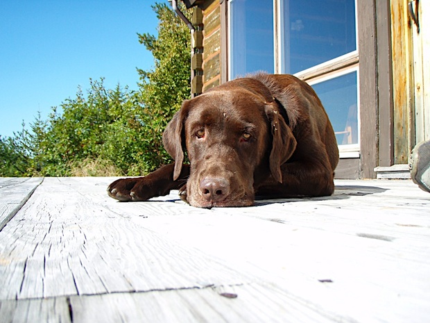 Tucker the dog lying in the sun