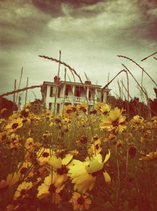 Picture of old house with flowers growing in front