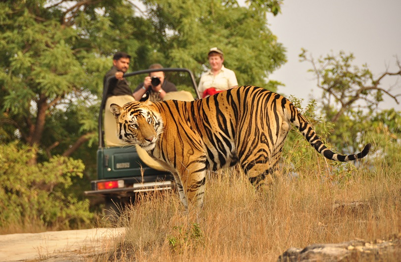 leopard-515510.jpg