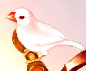 文鳥 | 水元 [pixiv] http://www.pixiv.net/member_illust.php?mode=medium&illust_id=57883079