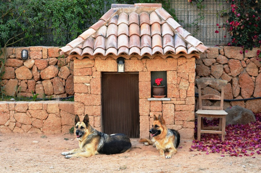 5 Ideas For Decorating A Dog House – Mega Bored