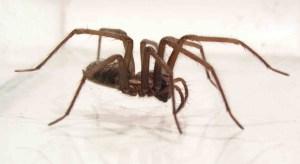 spin die overlast veroorzaakt en mega-des kan bestrijden