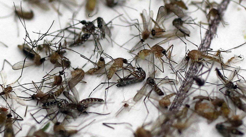 Muggen in de winter; wat te doen?