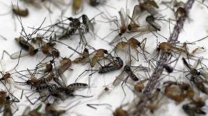 ongediertebestrijding Harderwijk waarbij ook insecten worden tegengegaan