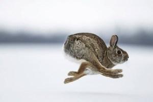 het verjagen van konijnen