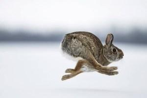 konijn in de winter