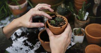 Comment créer un jardin parfait