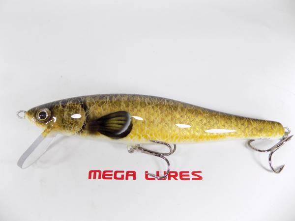 megalures-Snatcher Carp