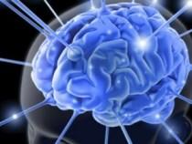 brain_213